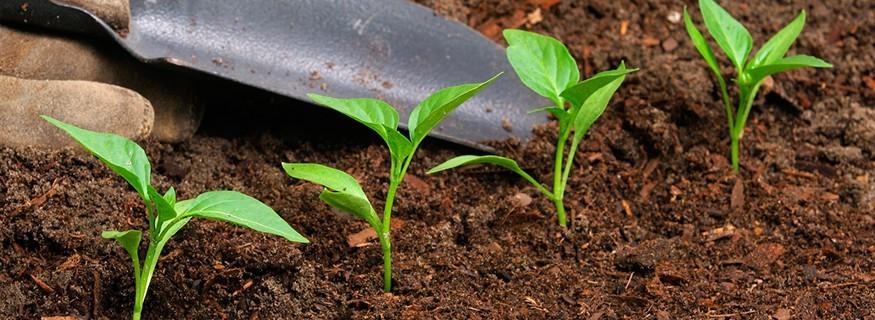 Fertilizante crecimiento y floración