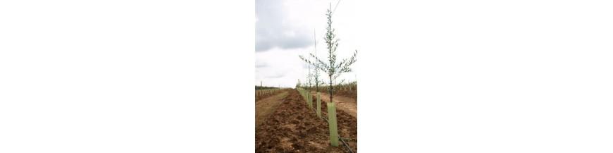 Protectores de árboles y hortícolas