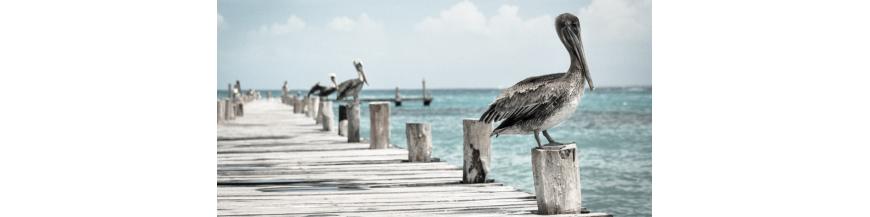 Ahuyentador de aves