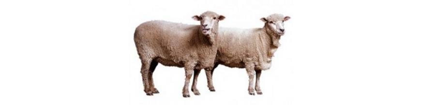 Ovino / porcino / vacuno
